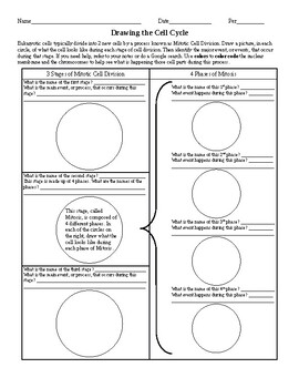 Cell worksheets