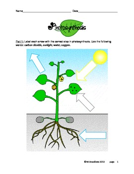 Printables Photosynthesis Worksheet Middle School photosynthesis worksheet elementary diigo groups elementary